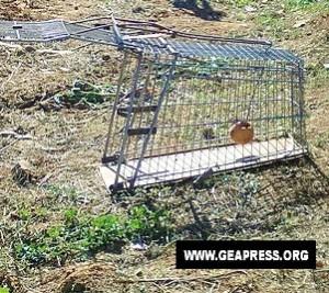 carrello spesa adattato a trappola per cinghiali